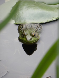 1st Place: Green Frog by Gena Anspach