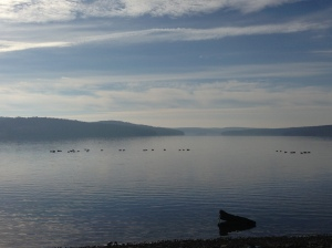 Canada geese on Lake Wallenpaupack